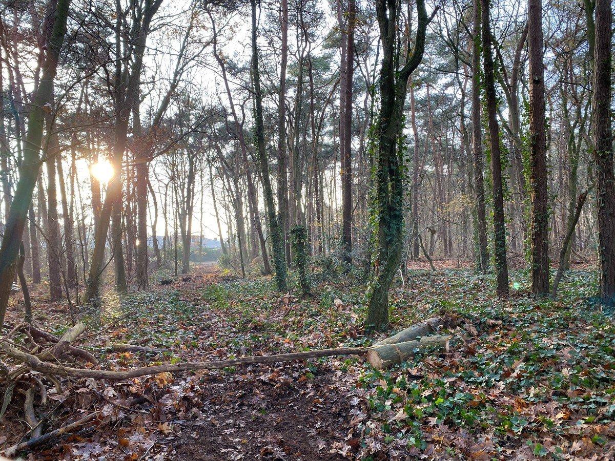 Mooi perceel bosgrond gelegen in aangename wandelbuurt!